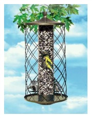 best bird feeder squirrel free